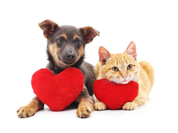 Como está o coração do seu cão ou gato?